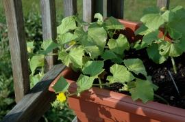 gardening_2