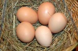 eggs_nest