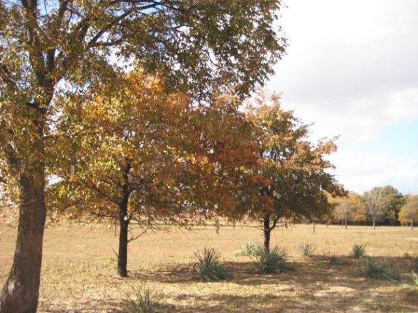 fall_2010 (2)