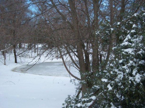 pond (2).jpg
