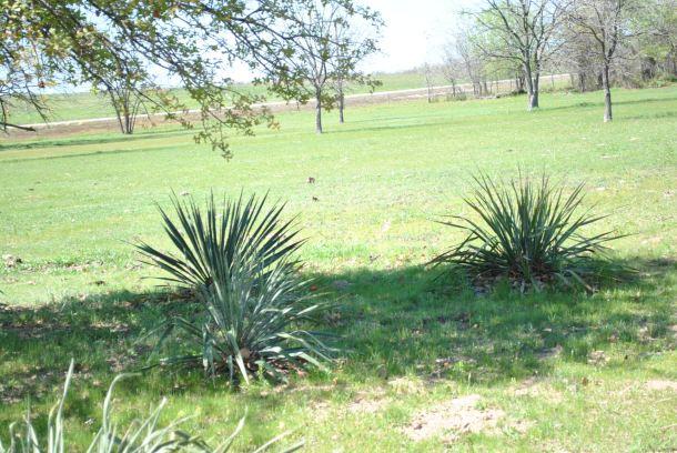 spring_farm_pics 022 (2).jpg